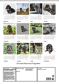 Der Dackel (M)ein treuer Weggefährte (Wandkalender 2019 DIN A2 hoch) - Produktdetailbild 13