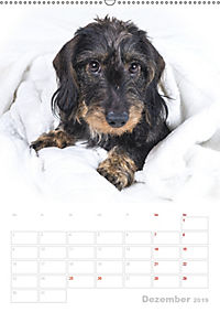Der Dackel (M)ein treuer Weggefährte (Wandkalender 2019 DIN A2 hoch) - Produktdetailbild 12