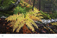 Der deutsche Wald - Ein literarischer Spaziergang Edition 2018 - Produktdetailbild 2