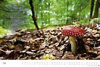 Der deutsche Wald - Ein literarischer Spaziergang Edition 2018 - Produktdetailbild 8