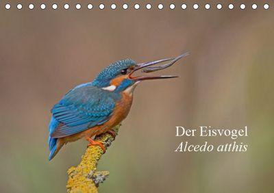 Der Eisvogel - Alcedo atthis (Tischkalender 2019 DIN A5 quer), Wiking Dürre