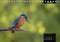 Der Eisvogel - Alcedo atthis (Tischkalender 2019 DIN A5 quer) - Produktdetailbild 6