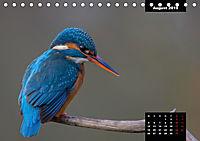 Der Eisvogel - Alcedo atthis (Tischkalender 2019 DIN A5 quer) - Produktdetailbild 8