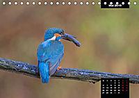 Der Eisvogel - Alcedo atthis (Tischkalender 2019 DIN A5 quer) - Produktdetailbild 5