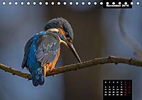 Der Eisvogel - Alcedo atthis (Tischkalender 2019 DIN A5 quer) - Produktdetailbild 11