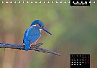 Der Eisvogel - Alcedo atthis (Tischkalender 2019 DIN A5 quer) - Produktdetailbild 2