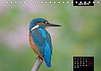 Der Eisvogel - Alcedo atthis (Tischkalender 2019 DIN A5 quer) - Produktdetailbild 4