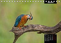 Der Eisvogel - Alcedo atthis (Tischkalender 2019 DIN A5 quer) - Produktdetailbild 7