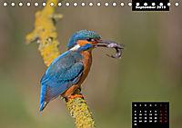 Der Eisvogel - Alcedo atthis (Tischkalender 2019 DIN A5 quer) - Produktdetailbild 9