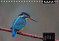 Der Eisvogel - Alcedo atthis (Tischkalender 2019 DIN A5 quer) - Produktdetailbild 12