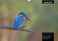 Der Eisvogel - Alcedo atthis (Wandkalender 2019 DIN A3 quer) - Produktdetailbild 2