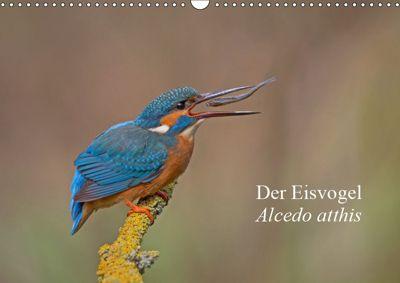 Der Eisvogel - Alcedo atthis (Wandkalender 2019 DIN A3 quer), Wiking Dürre