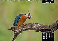 Der Eisvogel - Alcedo atthis (Wandkalender 2019 DIN A3 quer) - Produktdetailbild 7