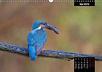 Der Eisvogel - Alcedo atthis (Wandkalender 2019 DIN A3 quer) - Produktdetailbild 5