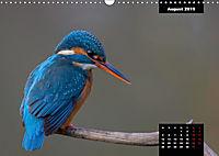 Der Eisvogel - Alcedo atthis (Wandkalender 2019 DIN A3 quer) - Produktdetailbild 8