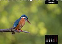 Der Eisvogel - Alcedo atthis (Wandkalender 2019 DIN A3 quer) - Produktdetailbild 6