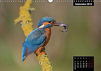 Der Eisvogel - Alcedo atthis (Wandkalender 2019 DIN A3 quer) - Produktdetailbild 9