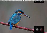 Der Eisvogel - Alcedo atthis (Wandkalender 2019 DIN A3 quer) - Produktdetailbild 12