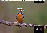 Der Eisvogel - Alcedo atthis (Wandkalender 2019 DIN A3 quer) - Produktdetailbild 10