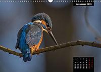 Der Eisvogel - Alcedo atthis (Wandkalender 2019 DIN A3 quer) - Produktdetailbild 11