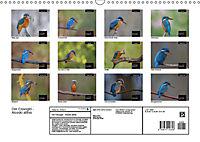 Der Eisvogel - Alcedo atthis (Wandkalender 2019 DIN A3 quer) - Produktdetailbild 13