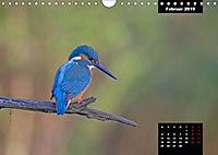 Der Eisvogel - Alcedo atthis (Wandkalender 2019 DIN A4 quer) - Produktdetailbild 2