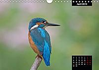 Der Eisvogel - Alcedo atthis (Wandkalender 2019 DIN A4 quer) - Produktdetailbild 4