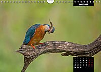 Der Eisvogel - Alcedo atthis (Wandkalender 2019 DIN A4 quer) - Produktdetailbild 7