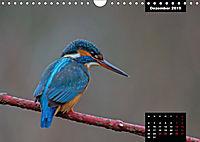 Der Eisvogel - Alcedo atthis (Wandkalender 2019 DIN A4 quer) - Produktdetailbild 12