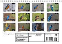 Der Eisvogel - Alcedo atthis (Wandkalender 2019 DIN A4 quer) - Produktdetailbild 13