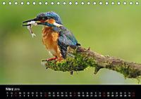 Der Eisvogel...fliegendes Juwel (Tischkalender 2019 DIN A5 quer) - Produktdetailbild 3