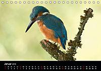 Der Eisvogel...fliegendes Juwel (Tischkalender 2019 DIN A5 quer) - Produktdetailbild 1
