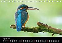 Der Eisvogel...fliegendes Juwel (Tischkalender 2019 DIN A5 quer) - Produktdetailbild 8
