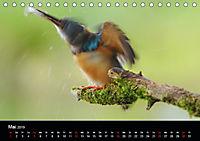 Der Eisvogel...fliegendes Juwel (Tischkalender 2019 DIN A5 quer) - Produktdetailbild 5