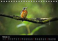 Der Eisvogel...fliegendes Juwel (Tischkalender 2019 DIN A5 quer) - Produktdetailbild 2