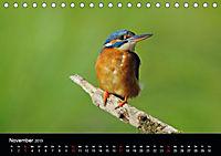 Der Eisvogel...fliegendes Juwel (Tischkalender 2019 DIN A5 quer) - Produktdetailbild 11