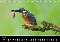 Der Eisvogel...fliegendes Juwel (Tischkalender 2019 DIN A5 quer) - Produktdetailbild 10