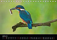 Der Eisvogel...fliegendes Juwel (Tischkalender 2019 DIN A5 quer) - Produktdetailbild 6