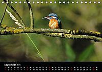 Der Eisvogel...fliegendes Juwel (Tischkalender 2019 DIN A5 quer) - Produktdetailbild 9