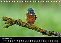 Der Eisvogel...fliegendes Juwel (Tischkalender 2019 DIN A5 quer) - Produktdetailbild 12