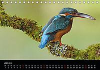 Der Eisvogel...fliegendes Juwel (Tischkalender 2019 DIN A5 quer) - Produktdetailbild 7