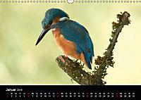Der Eisvogel...fliegendes Juwel (Wandkalender 2019 DIN A3 quer) - Produktdetailbild 1