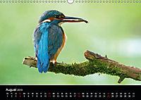 Der Eisvogel...fliegendes Juwel (Wandkalender 2019 DIN A3 quer) - Produktdetailbild 8