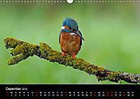 Der Eisvogel...fliegendes Juwel (Wandkalender 2019 DIN A3 quer) - Produktdetailbild 12