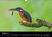 Der Eisvogel...fliegendes Juwel (Wandkalender 2019 DIN A3 quer) - Produktdetailbild 10