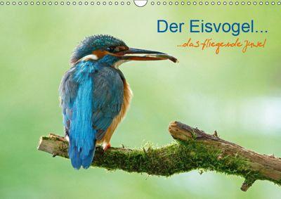 Der Eisvogel...fliegendes Juwel (Wandkalender 2019 DIN A3 quer), Mirko Fuchs