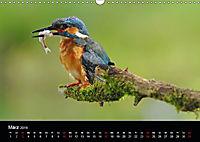 Der Eisvogel...fliegendes Juwel (Wandkalender 2019 DIN A3 quer) - Produktdetailbild 3