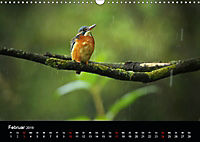 Der Eisvogel...fliegendes Juwel (Wandkalender 2019 DIN A3 quer) - Produktdetailbild 2