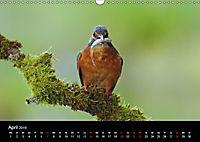 Der Eisvogel...fliegendes Juwel (Wandkalender 2019 DIN A3 quer) - Produktdetailbild 4