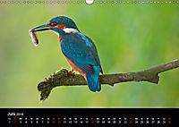 Der Eisvogel...fliegendes Juwel (Wandkalender 2019 DIN A3 quer) - Produktdetailbild 6